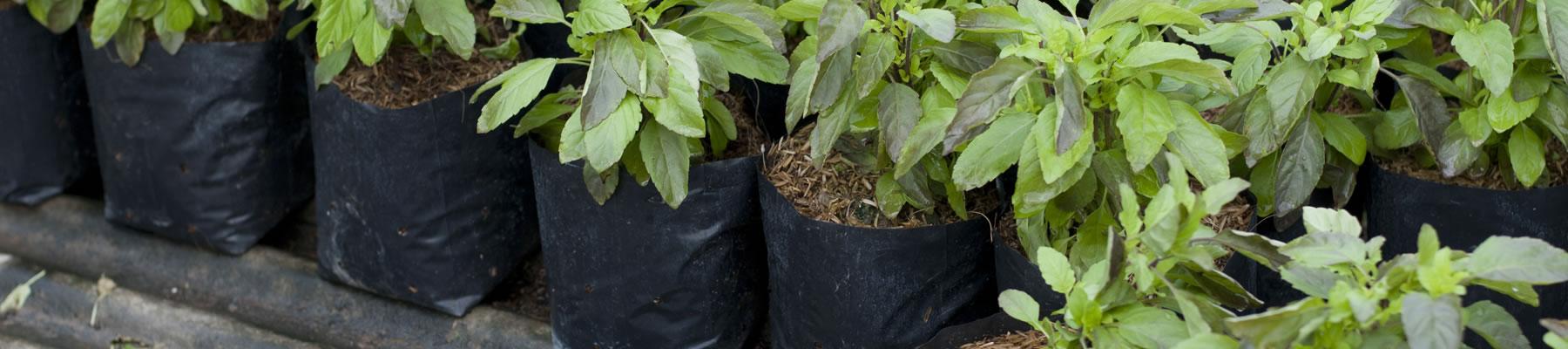 Piantine da orto e piante da frutto - Calendario trattamenti piante da frutto ...